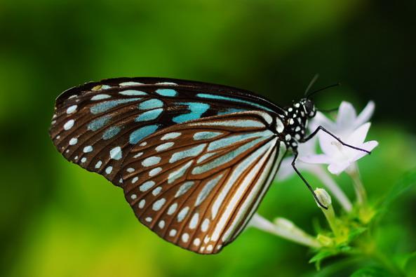 蝶々:夢のとちゅうで~pre open ...