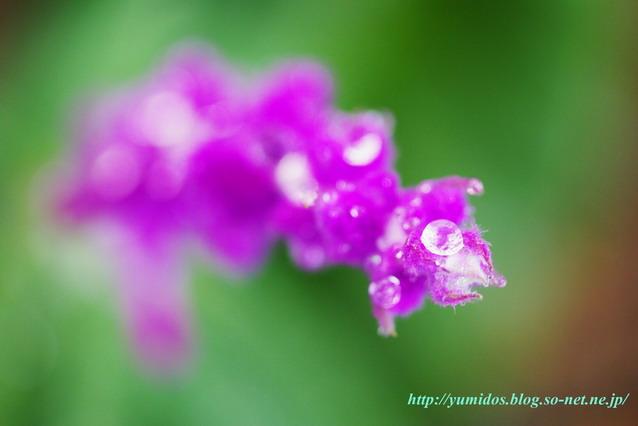 紫hana.jpg