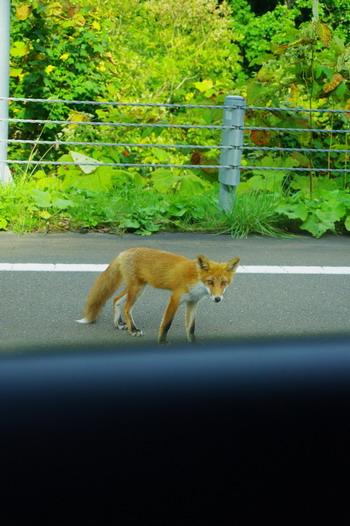 北海道 159 70.jpg